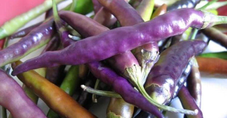 chili-peper
