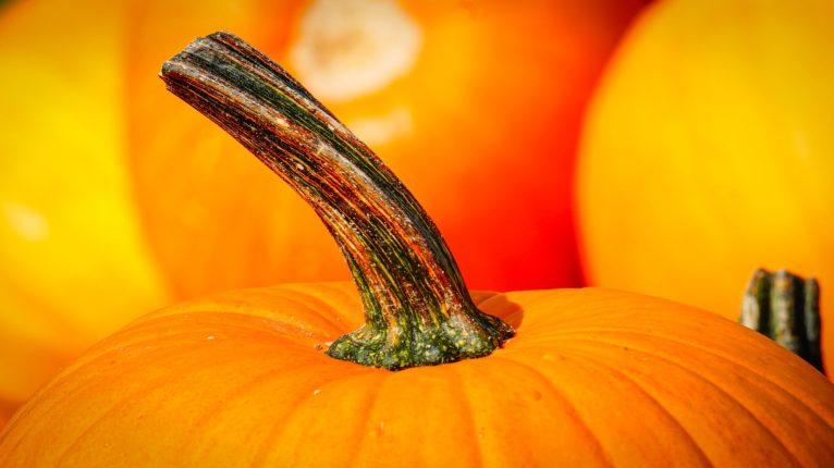 pumpkin-3680048_1920