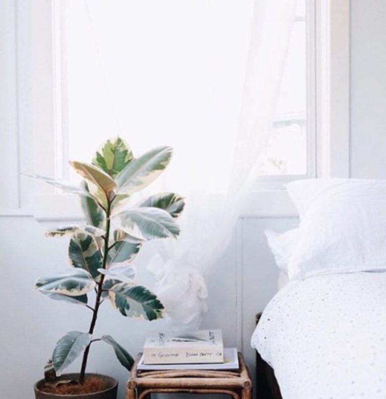 zet deze planten eens in je slaapkamer