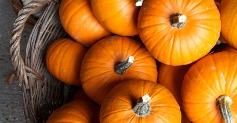 pumpkin-3675534_1920