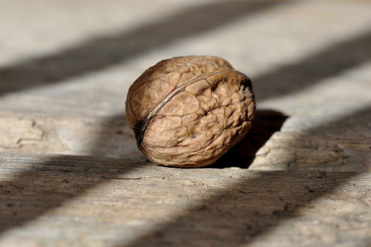 walnut-658569_1920